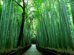 Sagano Bamboo Grove is located in mountainous Arashiyama region of Kyoto
