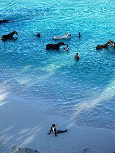 #Barbados #beach #horse