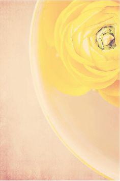 Yellow - laura evans photography #SummerColoursWeek #Yellow #photography
