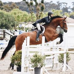 Beautiful Horse Pictures, Beautiful Horses, Cute Horses, Horse Love, English Riding, Hunter Jumper, Show Jumping, Equine Photography, Show Horses