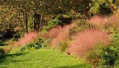 Chanticleer Garden, Philadelphia PA | Eragrostis spectabilis (Purple Lovegrass)