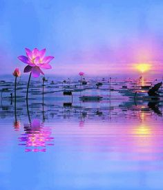 Lotus Lake photography beautiful nature lake gifs gif