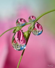 Reflections in water droplets make for such an artistic photo!