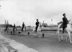 vintage-dogs.com-Airedale-Terrier.jpg