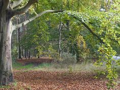 """""""5"""" by TravelPod blogger m8man from the entry """"The King's Wood, Thetford Forest"""" on Sunday, October 27, 2013 in West Stow, United Kingdom"""