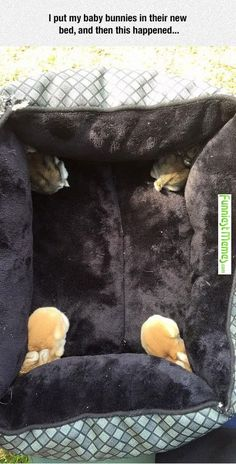 Baby bunnies in their new bed
