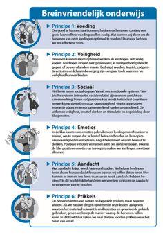 Breinvriendelijk onderwijs - Zes principes - coöperatief leren