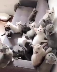 These cute kittens will warm your heart. Cats are wonderful creatures. Cute Cats And Kittens, I Love Cats, Crazy Cats, Kittens Cutest, Cute Funny Animals, Cute Baby Animals, Animals And Pets, Cute Dogs, Funny Cats