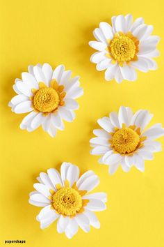 How to make a paper daisy: 3 creative ideas from paper - Papershape Beautiful Landscape Wallpaper, Beautiful Flowers Wallpapers, Pretty Wallpapers, Flower Phone Wallpaper, Wallpaper Iphone Cute, Textile Pattern Design, Paper Daisy, Sunflower Wallpaper, Paper Flowers Diy