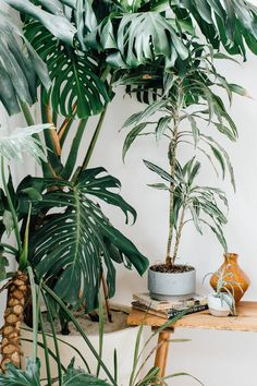Indoor greenery will spruce up small apartments and large houses alike. For those that lack a green thumb, don't worry visit our webpage today to learn about living walls. Indoor Garden, Indoor Plants, Home And Garden, Tropical Flowers, Tropical Plants, Palm Plants, Exotic Plants, Deco Nature, Decoration Plante