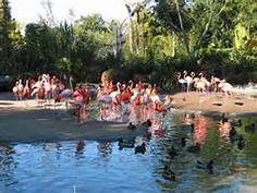 San Diego Zoo - Yahoo Image Search Results
