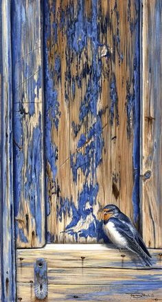 swallow on old door, fabulous lines, color and texture: