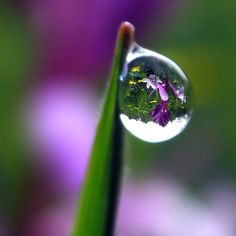 43 Ideas Photography Ideas Macro Morning Dew For 2019 Water Drop Photography, School Photography, Macro Photography, Amazing Photography, Photography Ideas, Reflection And Refraction, Water Reflections, Gota A Gota, Dew Drops