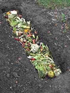 Composting Guide for Beginners: Helpful Tips To Make Great Compost