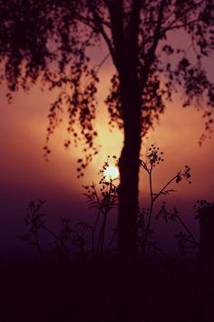 Different #tree #summer #finland #sun #sunset #bokeh #purple #lila #photography #love #passion