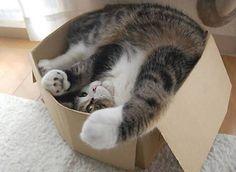 #TipParaEnamorarA Un Gato: Dele una caja de cartón.