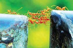 cooperation in action; we can build bridges if we help one another
