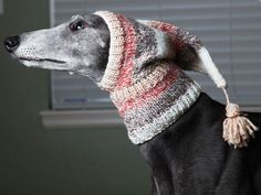 Love this greyhound knit hat for winter!