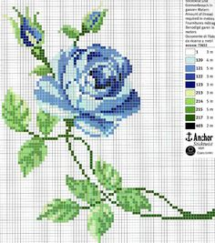 june wild rose project 2010 flower of the month