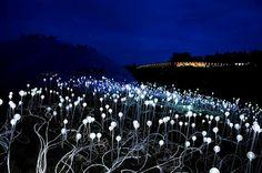 Field of Light, Bruce Munro - Artist