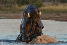 Having fun - Sable Dam, Kruger Park