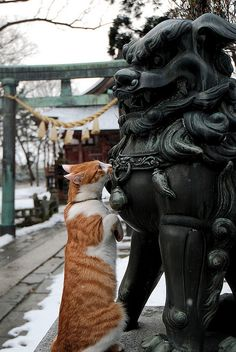Temple Cat vs. Guardian Lion-Dog( Komainu)/Japan