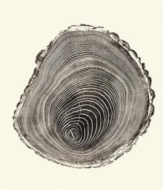 'Compression Wood' by Connecticut artist Bryan Nash Gill Woodcut (relief print), 30 x in. via the universe inside your mind Foto Filter, Blog Art, Illustration Art, Illustrations, Tree Rings, Art Plastique, Textures Patterns, Henna Patterns, Wood Patterns