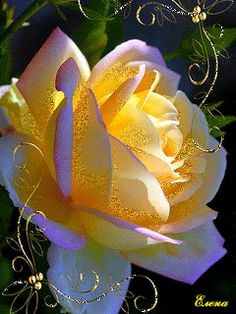 Glowing Yellow Rose – Famous Last Words Flowers Gif, Beautiful Rose Flowers, Beautiful Gif, Exotic Flowers, Amazing Flowers, My Flower, Beautiful Flowers, Cactus Flower, Lavender Roses