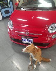 Aidan wants this car #dog #dogs #dogoftheday #instadogs...
