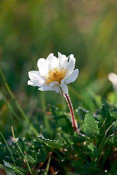Sarah Raven identifies 10 of Britain's rarest gems of the plant kingdom