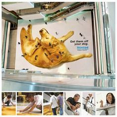 Wicked Ads: Pet Ads - How to use a pet in your ambient ad