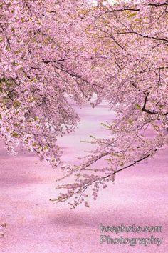8963943a0a Die 36 besten Bilder von spring