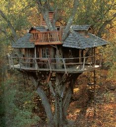 I have a weird dream of someday owning a treehouse that has a bridge to my back porch. I think I must still be 12 at heart.