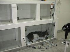 hospital veterinario projeto - Pesquisa Google