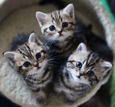 猫好き集まれ!癒しのねこ画像まとめ - NAVER まとめ