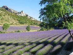 La route de la lavande : Drôme Provençale - Haut Vaucluse