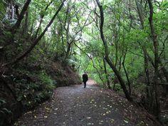 Wellington Botanic Garden, Wellington, New Zealand. Bush Walk by Big..Al, via Flickr