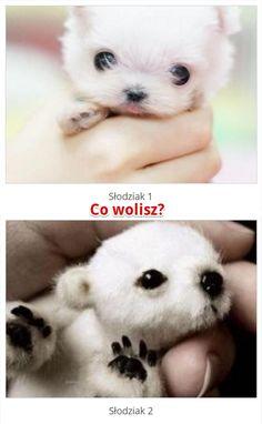 Co wolisz? http://www.ubieranki.eu/quizy/co-wolisz/417/co-wolisz_.html