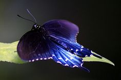 Google Image Result for http://www.color-photography.com/photographs/butterfly-8.jpg