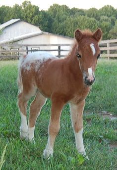 Image result for mini horse foal happy Birthday