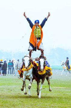 A sikh boy balancing on two horses Punjabi Culture, Amazing India, Rural India, Indian Colours, India People, B 13, Lion Art, India Tour, Sabyasachi