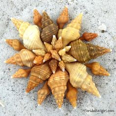 Sunny days and sunny shells on Sanibel.