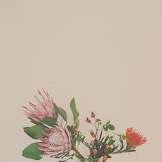 Protea + Rosehips Places For Tattoos, Organic Shapes, Botany, Tattoo Inspiration, Body Art, Bloom, Invitations, Ink, Greenhouses