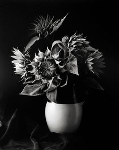 For Sale on - Sunflower Vase, Millerton, New York, by Paul Caponigro. Offered by Peter Fetterman Gallery. Straight Photography, Still Life Photography, Artistic Photography, Art Photography, Famous Photographers, Landscape Photographers, Sunflower Vase, Sacred Garden, Growth And Decay