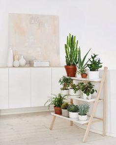 Plants at Home – Wishlist | Sarah Le Donne Blog