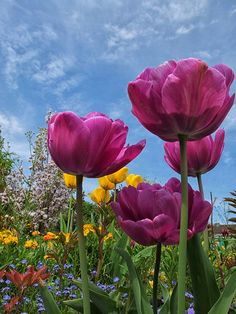 ~~Les tulipes | tulips at Claude Monet gardens, Giverny, France by laurent 297~~