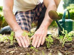 4 astuces pour chasser les taupes de son jardin noté 3.31 - 35 votes Vous cohabitez mal avec les taupes de votre jardin parce qu'elles malmènent votre terrain et ruinent votre culture potagère? Voici quelques astuces qui vous permettront de montrer aux taupes qu'elles ne sont pas les bienvenues chez vous: Plantez une tige en...