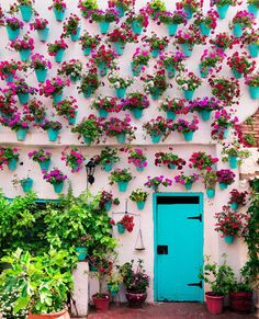 Colourful potted facades of Cordoba, Spain. 📷 by Miguel Angel. Miguel Angel, Malaga, Murs Roses, Wanderlust Hotel, Happy Evening, Cordoba Spain, Bohemian Wall Art, Travel And Leisure, Wall Art Designs