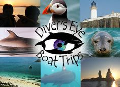 Divers Eye Boat Trips - Enjoy a SeaSkye Adventure and spectacular marine life in dramatic NW Skye. Whale, basking shark, dolphin & porpoise, sea bird colonies, fishing and much more.