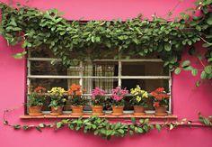 O vitrô da cozinha não é mais o mesmo desde que a paisagista Olga Wehba incluiu a trepadeira jasmim-de-madagáscar ao longo da fachada. A espécie foi conduzida por fios de náilon. Sobre o parapeito, os vasinhos de barro trazem calanchoês em tons de rosa, amarelo e vermelho Arquivo / Casa e Jardim